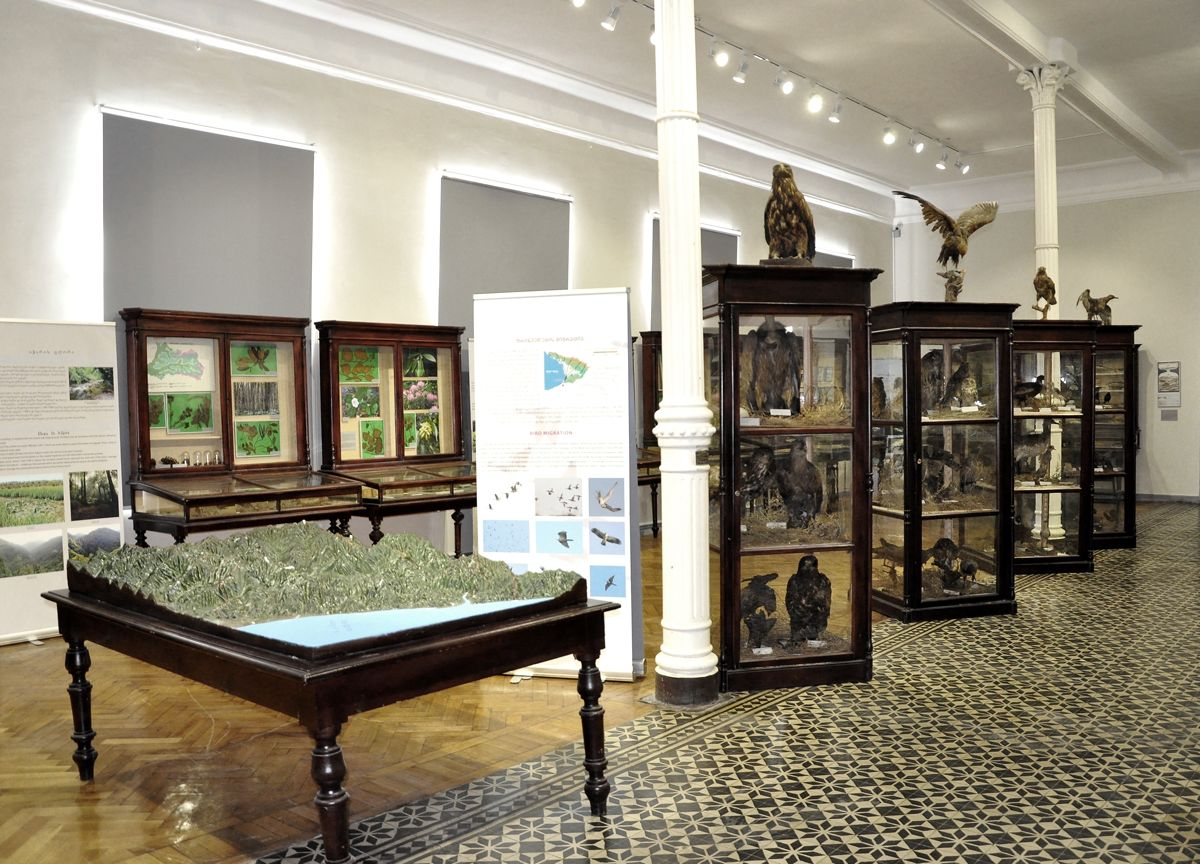 ვიმოგზაუროთ მუზეუმის ლაბირინთებში