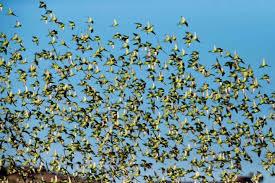 ფრინველთა სამყარო